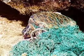 PILOT SMALL-SCALE COLLECTION OF OLD FISHING NETS  AND MARINE LITTER IN THE SARIYER MUNICIPALITY - Κεντρική Εικόνα